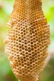 Ciérrese encima del panal no vacian ninguna abeja dentro Imagen de archivo libre de regalías