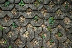 Ciérrese encima del pavimento concreto del bloque de la planta con rellenado con arena y smal Imagenes de archivo