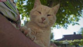 Ciérrese encima del pelirrojo Cat Sitting en revestimiento mayor del ` s de la mujer almacen de metraje de vídeo