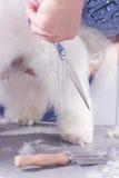 Ciérrese encima del pelo de la piel del perro de las tijeras Fotos de archivo libres de regalías