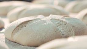 Ciérrese encima del proceso de los panes del trigo de la hornada almacen de metraje de vídeo