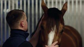 Ciérrese encima del retrato de un hombre que alimenta y que acaricia un caballo Individuo joven que juega con el caballo marrón e almacen de video