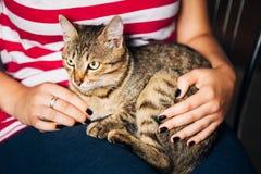 Ciérrese encima del retrato Tabby Male Kitten Cat Foto de archivo libre de regalías