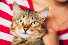 Ciérrese encima del retrato Tabby Male Kitten Cat Fotografía de archivo libre de regalías
