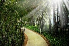 Ciérrese encima del sendero vacío en parque público y el haz de luz en la explosión foto de archivo