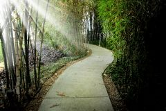 Ciérrese encima del sendero vacío en parque público y el haz de luz en la explosión fotografía de archivo libre de regalías