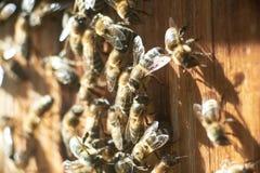 Ciérrese encima del tiro de abejas en el colmenar Fotos de archivo