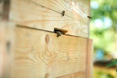 Ciérrese encima del tiro de abejas en el colmenar Foto de archivo libre de regalías