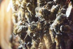 Ciérrese encima del tiro de abejas en el colmenar Fotos de archivo libres de regalías