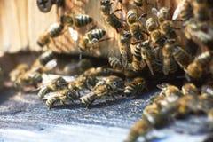 Ciérrese encima del tiro de abejas en el colmenar Imagen de archivo