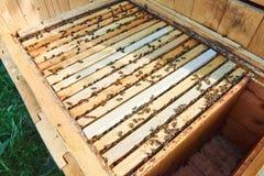 Ciérrese encima del tiro de colmenas en colmenar Foto de archivo libre de regalías