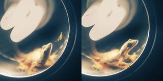 Ciérrese encima del tiro del gekko Imagen de archivo libre de regalías