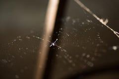Ciérrese encima del tiro del spiderweb Fotos de archivo