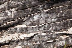 Macro de madera quemada Imagen de archivo libre de regalías
