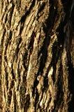 Ciérrese encima del tronco de árbol de la sal para un fondo imagenes de archivo
