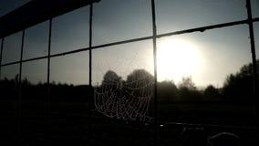 Ciérrese encima del web de araña con descensos de rocío en la cerca de la rejilla en fondo de los rayos del sol almacen de metraje de vídeo