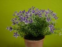 Ciérrese hasta las pequeñas flores plásticas púrpuras en un florero en la tabla Foto de archivo