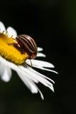 Ciérrese para arriba con el fallo de funcionamiento en la flor Foto de archivo