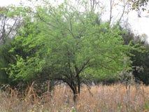 Ciérrese para arriba de árbol fotografía de archivo