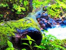Ciérrese para arriba de árbol que han caído sobre el río fotografía de archivo
