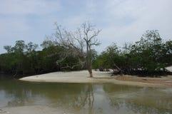 Ciérrese para arriba de árbol seco Fotografía de archivo