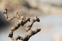 Ciérrese para arriba de árbol seco Imagen de archivo