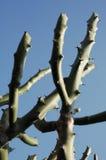Ciérrese para arriba de árbol seco Foto de archivo libre de regalías