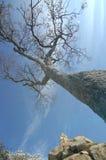 Ciérrese para arriba de árbol seco Imagenes de archivo