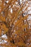 Ciérrese para arriba de árbol seco Imágenes de archivo libres de regalías