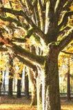 Ciérrese para arriba de árbol seco Foto de archivo