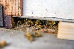 Ciérrese para arriba de abejas del vuelo Colmena y abejas de madera Foto de archivo libre de regalías