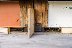 Ciérrese para arriba de abejas del vuelo Colmena y abejas de madera Fotografía de archivo libre de regalías