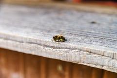Ciérrese para arriba de abejas del vuelo Colmena y abejas de madera Imagen de archivo