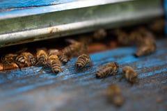 Ciérrese para arriba de abejas del vuelo Colmena y abejas de madera Imágenes de archivo libres de regalías