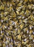 Ciérrese para arriba de abejas el pulular Foto de archivo libre de regalías