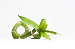 Ciérrese para arriba de bambú con la hoja imagen de archivo libre de regalías