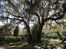 Ciérrese para arriba de bosque foto de archivo libre de regalías