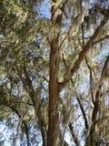 Ciérrese para arriba de bosque fotos de archivo libres de regalías