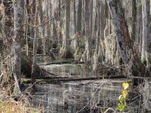 Ciérrese para arriba de bosque fotografía de archivo