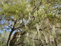 Ciérrese para arriba de bosque imagen de archivo