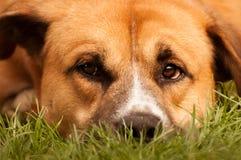Ciérrese para arriba de cara del perro Imagenes de archivo