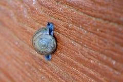 Ciérrese para arriba de caracol Fotografía de archivo