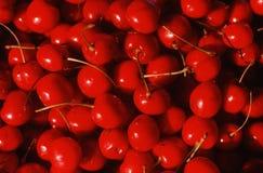 Ciérrese para arriba de cerezas maduras Imágenes de archivo libres de regalías