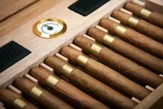 Ciérrese para arriba de cigarros en caja abierta del humidor Foto de archivo