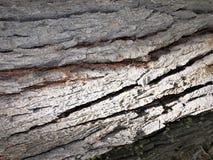 Ciérrese para arriba de corteza de árbol áspera Foto de archivo