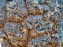 Ciérrese para arriba de corteza de árbol Fotografía de archivo libre de regalías
