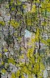 Ciérrese para arriba de corteza colorida Fotografía de archivo libre de regalías
