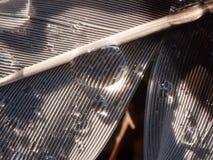 ciérrese para arriba de descensos mojados del agua en la tierra de la naturaleza de la pluma de pájaro Imagen de archivo