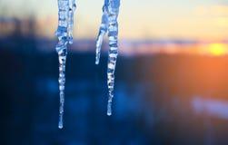 Ciérrese para arriba de dos carámbanos en un fondo colorido del cielo del invierno de la puesta del sol foto de archivo libre de regalías
