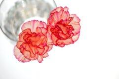 Ciérrese para arriba de dos flores Imagenes de archivo